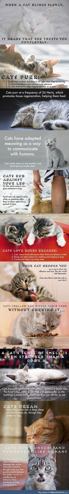 Funny Cat Facts cute animals cat cats adorable animal kittens pets kitten facts funny animals funny cats by estelle I Love Cats, Cute Cats, Funny Cats, Funny Animals, Cute Animals, Animals And Pets, Animals Planet, Animals Images, Crazy Cat Lady