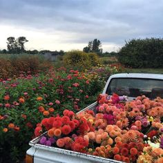 Find images and videos about beautiful, aesthetic and nature on We Heart It - the app to get lost in what you love. My Flower, Wild Flowers, Beautiful Flowers, Flower Farm, Beautiful Moments, Flower Truck, Colorful Flowers, Spring Flowers, Nature Aesthetic