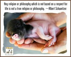 """Any religion or philosophy which is not based on a respect for life is not a true religion or philosophy."" ~Albert Schweitzer"