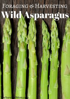 One of the tastiest plants around is the wild asparagus. Know how to find it, how to harvest it, and how to prepare it. Foraging wild asparagus is a useful skill. Asparagus Plant, Fresh Asparagus, Emergency Food, Survival Food, Survival Kits, Outdoor Survival, Emergency Preparedness, Eat Seasonal, Living Off The Land