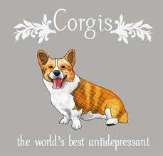We love Newman - our Cardigan Welsh Corgi