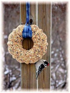 Jeanne Sammons's easy seed wreath attracts a woodpecker.  All you need is a bundt or ring pan, Knox gelatin and ....birdseed!  Fun!