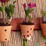7 ERROS no Cultivo de Orquídeas Que Você Deve Evitar Para Ter Sucesso