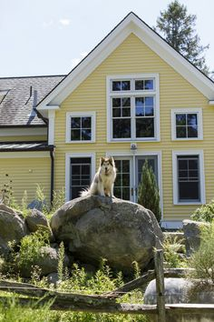 A dog overlooks the grounds of a 10-acre estate in Essex, Mass. #dogsofwsj