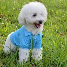 Pet T Shirt Spring Puppy Dog Vest Pet T-shirt For Dogs Mascotas Small Dog  Clothes Puppy Apparel Pet Clothing Accessories For Cat 55038832f