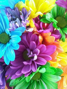 yellow orange green blue and purple daisies for wedding flowers