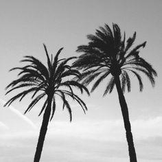 Beautiful palm trees black and white photgraphy. Gray Aesthetic, Beach Aesthetic, Black And White Aesthetic, Black And White Beach, Black And White Pictures, Photography Guide, Beach Photography, Palm Trees Tumblr, Take Better Photos