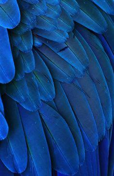 .Azul.