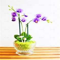 100 Pcs/bag rare Mini Orchid Seeds phalaenopsis orchid Indoor Miniature garden bonsai flower seeds orchid Pot home garden plant.