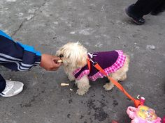 Seems likes the canines at Bolivia are also into fashion!