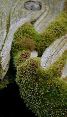 love this look. nothing fills gaps in like lush moss!   Old wood with moss around the edges.
