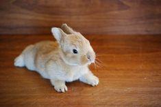 Baby bunny♥