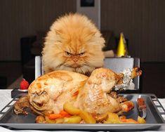 19 s�ta bilder p� vad som verkar vara en mycket missn�jd katt - Om blickar kunde d�da