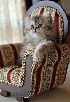 Tabby Cats Fluffy You do realise you'll have to keep buying me bigger chairs, don't you? Cool Cats, I Love Cats, Crazy Cats, Cute Kittens, Cats And Kittens, Tabby Cats, Pretty Cats, Beautiful Cats, Animals Beautiful