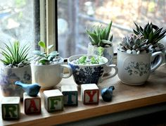 Autumn Home: Coffee cup plants