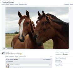 #konieNabakomie, czyli konie na Bakomie