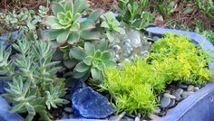 Southeast Gardening: Vacation-Proof Container.  I love using pebbles and glass in Succulent combos