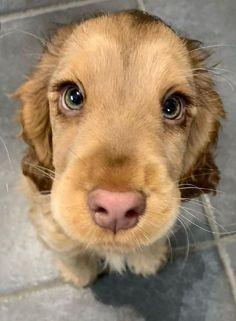 Super Cute Puppies, Baby Animals Super Cute, Cute Baby Dogs, Cute Little Puppies, Cute Dogs And Puppies, Cute Little Animals, Cute Funny Animals, Doggies, Cutest Dogs
