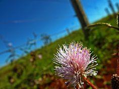 Olhares do avesso: espremendo Bom dia! Good Day. Good morning. Agora no blog. Now in the blog. Acesse. Acess. #poesia #poetry #blog #dream #hands #mãos #sonho #gedicht #uta #shi #shige #poesie #kavita #bomfia #goodday #goodmorning #heart #reason #smiles #spread #lost #moments  http://olharesdoavesso.blogspot.com.br/2015/10/espremendo.html