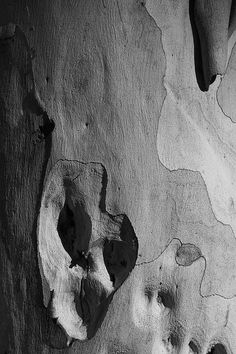 Gumtree abstract by Katarina Christenson Tactile Texture, Photo Tree, Color Shapes, Shades Of Black, Light And Shadow, Textures Patterns, Art Photography, Images, Black And White