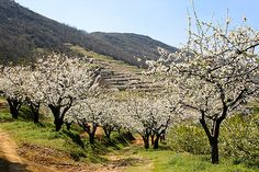 places to see spring at its best