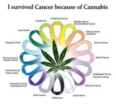 Cannabis Cured My Cancer!