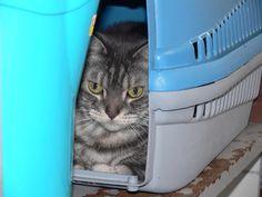 Pets Patinhas: Será que gosto da minha caixa de transporte? Amo! ...