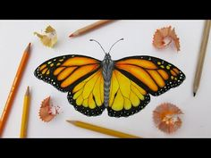 How to Draw a Realistic Butterfly: Time Lapse - YouTube