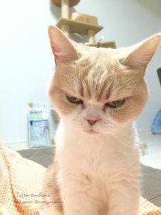 岡田モフリシャスと猫の小雪(@moflicious)さん  [ Okada Mofurishasu and cats of light snow]   |  Twitter
