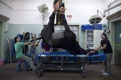 Het leven zoals het is: de paardenkliniek - HLN.be