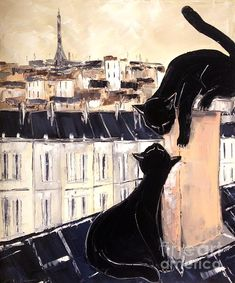 Black Cat with Fis Pretty On Roofs Paris; Atelier De Jiel
