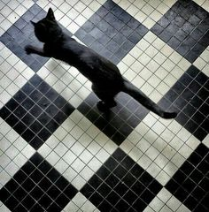 Pets art print featuring the photograph diamond black cat by louise legresley Crazy Cat Lady, Crazy Cats, Laika Studios, Coraline Jones, Akira Kurusu, Neko, American Gods, Black Butler, Miraculous Ladybug