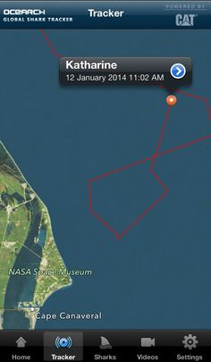 Katharine a 14ft+ white #shark is off the east coast of #FL. Track her http://www.ocearch.org/