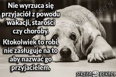 Prawdziwy Przyjaciel True Stories, Memes, Dogs, Quotes, Life, Animals, Quote, Quotations, Animales