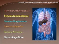 Beneficios Para La Salud Del Ganoderma Lucidum Noni Juice Benefits, Anorexia, Spirulina, Ayurveda, Diabetes, Medicine, Cancer, English, Respiratory System