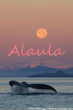 Alaula - girls name of Hawaiian origin meaning Light of Dawn or Sunset Glow.