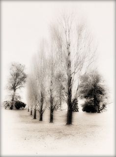 Winter On Way by DaraDPhotography, via Flickr