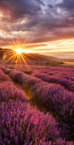 Incredible sunset looking across lavender fields in Bulgaria #sunset