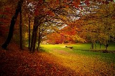 Autumn, Forest, Woods, Nature, Fall