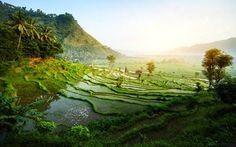 Reisterassen auf Bali