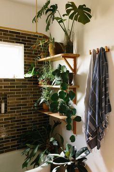 open shelving, sunlight, and plants in the perfect bathroom