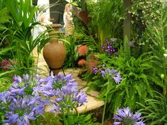 Garden Patio Urn Agapanthus