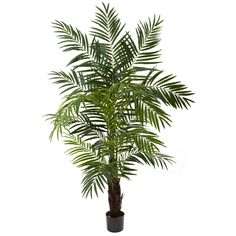 Here's one of the most realistic looking palm trees you will ever find (unless you're on a tropical beach, of course!) This stunning Areca palm tree is tall (6'), full (with 12 trunks and more than 600 leaves ready to sway in the ocean breeze), and is ready to stand proud in your home or office. The best part is you don't need a tropical environment (or even water) to keep it looking beautiful. Makes a perfect gift as well.