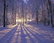 winter photography - Google Search