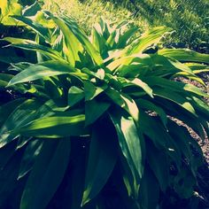 kevadine roheline / kevätvihreä