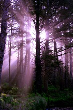 violet rays in a forest of trees Beautiful World, Beautiful Places, Beautiful Scenery, Beautiful Moments, Enchanted, Surfer, Purple Haze, Deep Purple, Natural World