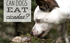 Nutrition Guide, Diet And Nutrition, Digestive Problems, Can Dogs Eat, Guide Dog, Homemade Dog, Dog Food Recipes, Pup, Canning