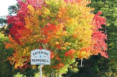 Fall in Pepperell