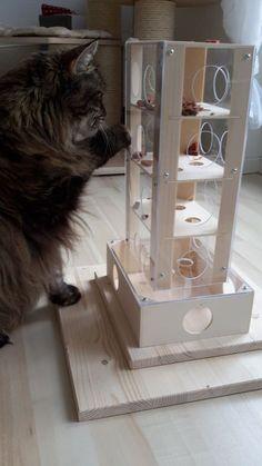 Intelligenzspiel für Katzen Spielzeug #catsdiyideas