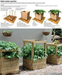 Great way to grow organic potatoes.